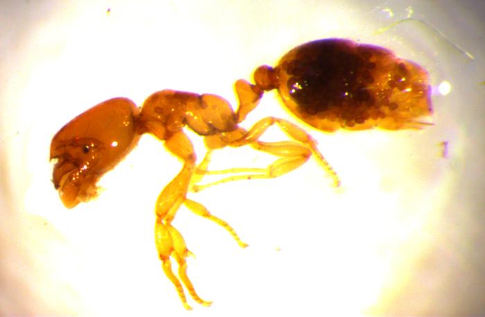Ratselhafte Krankheit Bei Ameisen In Der Nordwestschweiz